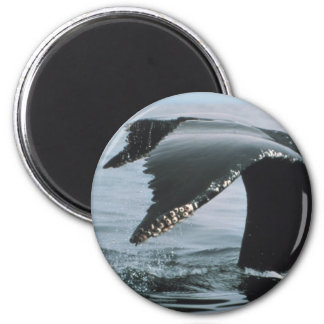 Humpback Whale Tail Magnets