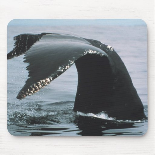 Humpback Whale Tail Mouse Pads