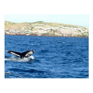 Humpback Whale Tail Postcard