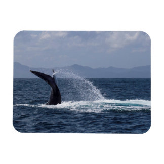 Humpback Whale Tail Splash Magnet