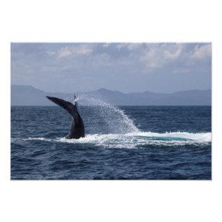 Humpback Whale Tail Splash Photo Print