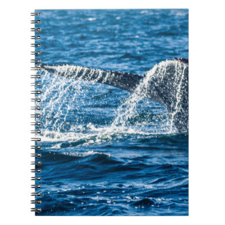 Humpback Whale Washington State Notebook
