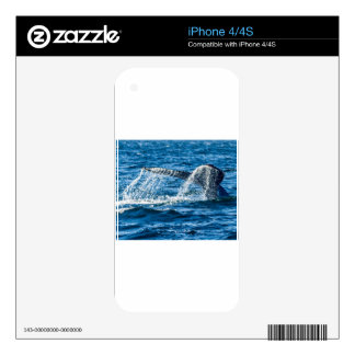 Humpback Whale Washington State Skins For The iPhone 4S