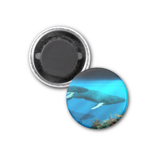 Humpback Whales 1 Inch Round Magnet