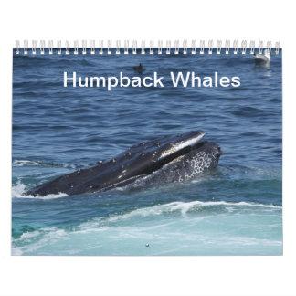 Humpback Whales calendar