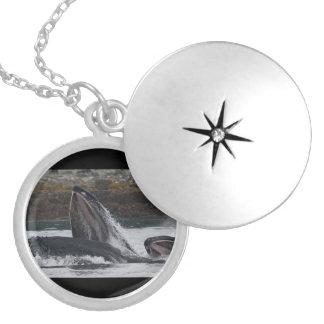 Humpback whales feeding round locket necklace