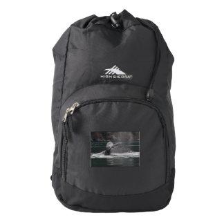 Humpback whales high sierra backpack