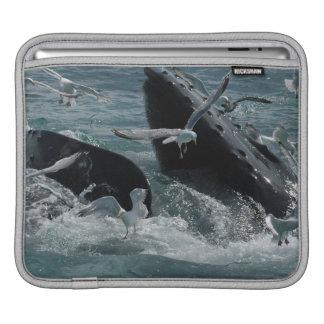 Humpback Whales  iPad Sleeve