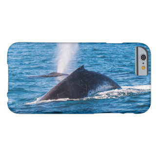 Humpback Whales iPhone 6 Case