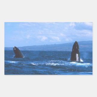 Humpback Whales Jumping Rectangular Sticker