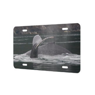 Humpback whales license plate