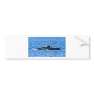 Beach Themed HUMPBACK WHALES MACKAY QUEENSLAND AUSTRALIA BUMPER STICKER