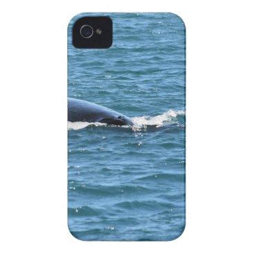 Beach Themed HUMPBACK WHALES MACKAY QUEENSLAND AUSTRALIA iPhone 4 COVER