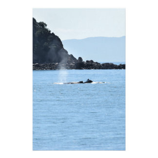 HUMPBACK WHALES MACKAY QUEENSLAND AUSTRALIA STATIONERY