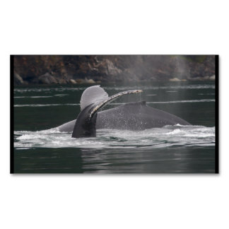 Humpback whales magnetic business card