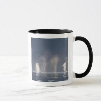 Humpback Whales Megaptera novaeangliae) Mug