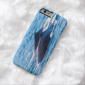 Humpback Whales Off Surfers Paradise Australia Barely There iPhone 6 Case