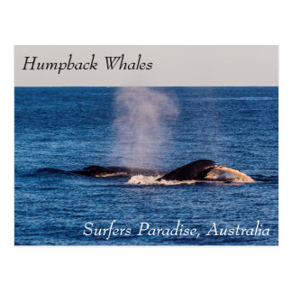 Humpback Whales Off Surfers Paradise Postcard