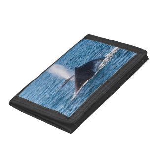 Humpback Whales Off Surfers Paradise Tri-fold Wallets