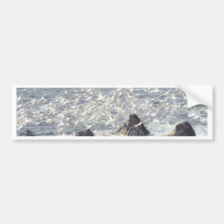 Humpback whales, seagulls in Seward, Alaska Bumper Sticker