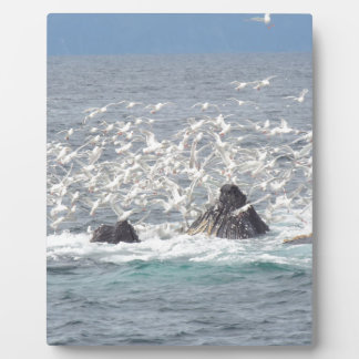 Humpback whales, seagulls in Seward, Alaska Plaque