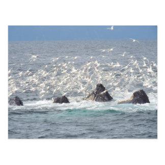 Humpback whales, seagulls in Seward, Alaska Postcard