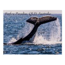 Humpback Whales Surfers Paradise Pacific Ocean Postcard
