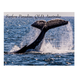 Humpback Whales Surfers Paradise Pacific Ocean Postcard
