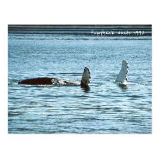 Humpback whales, Wild Whale in the Ocean 1992 Postcard