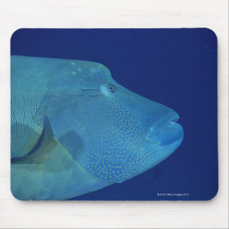 Humphead Wrasse 2 Mouse Pad