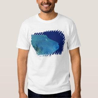 Humphead Wrasse 2 Tshirts