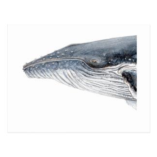 Hunchbacked whale - yubarta - picture postcard