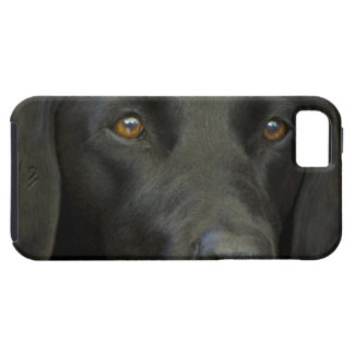 Hund de Svart Labrador iPhone 5 Protectores