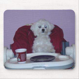 hundin sabio malthese tesis vez está sentado en ki tapetes de ratones