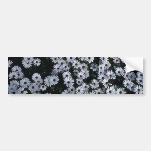 Hundreds Of White Flowers Bumper Stickers
