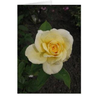 Hungarian-Boldog születésnapot-yellow rose Card