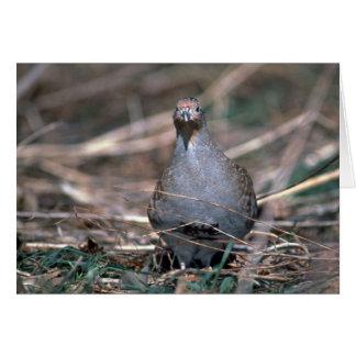 Hungarian partridge greeting card