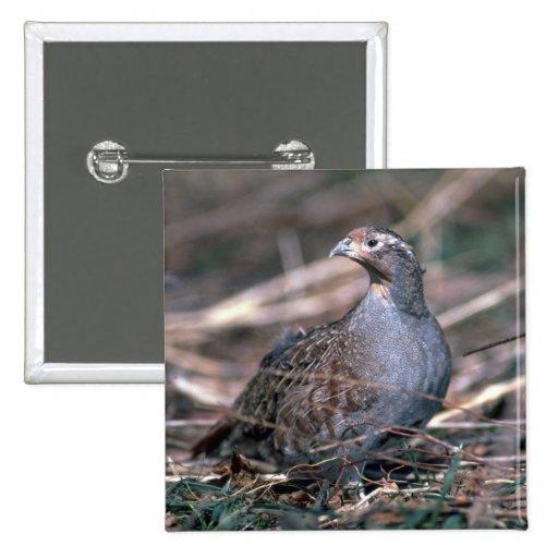 Hungarian partridge pin