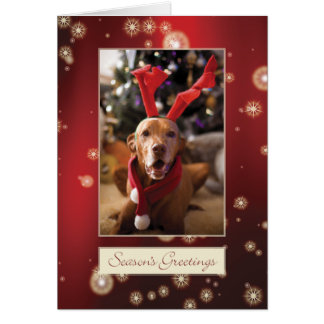 Hungarian Vizsla Christmas Card 008