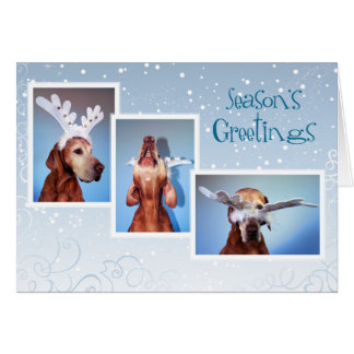 Hungarian Vizsla Christmas Card 011