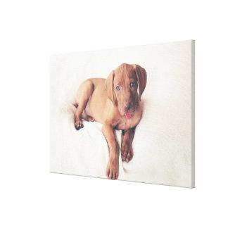 Hungarian Vizsla Puppy Canvas Print