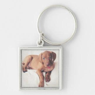 Hungarian Vizsla Puppy Keychain