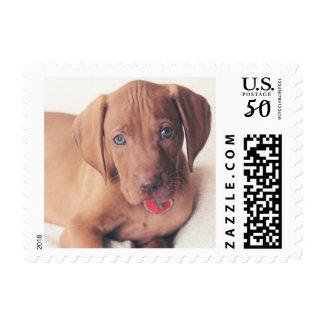 Hungarian Vizsla Puppy Postage