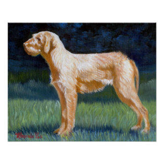 Hungarian Wirehaired Vizsla Dog Portrait Poster