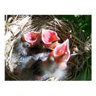 Hungry Babies Postcard