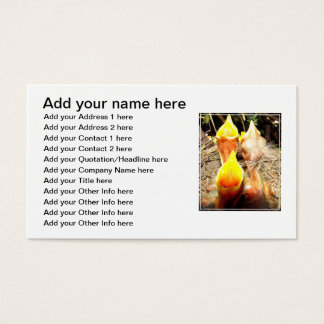Hungry Baby Robins Business Card