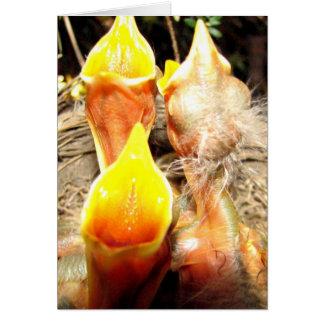 Hungry Baby Robins Card