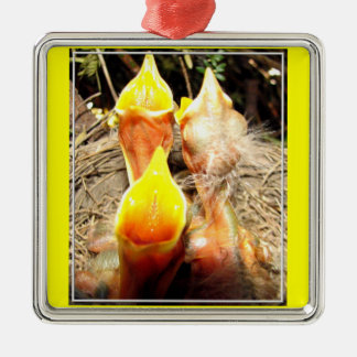 Hungry Baby Robins Metal Ornament