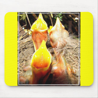 Hungry Baby Robins Mouse Pad