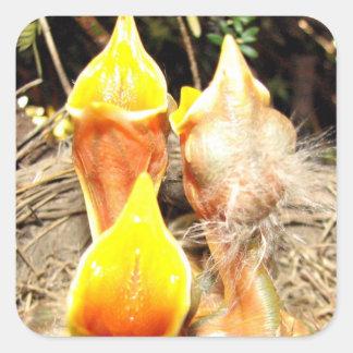 Hungry Baby Robins Sticker